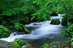 Asura Rapids (Fred Lin) Tags: oirase stream aomori japan      zeiss milvus 50mm longexposure d810