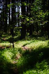 end of Spring at Harris Lake 9 (furrycelt) Tags: harrislake newhillnc nikon85mmf14afd nikon85mmf14 northcarolina shearonharrisreservoir jianwilson photographersoftumblr 85mm d600 june nikon forest furrycelt lake lensblr natural nature path spring trees water woods