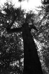Shinjuku Gyoen, Tokyo (fabiolug) Tags: tree trees trunk branches y sky nature shinjukugyoen park shinjuku tokyo japan japanese asia leicammonochrom mmonochrom monochrom leicamonochrom leica leicam rangefinder blackandwhite blackwhite bw monochrome biancoenero 35mmsummicronasph 35mmf2summicronasph summicronm35mmf2asph summicron35mmf2asph 35mm summicron leicasummicron leica35mm
