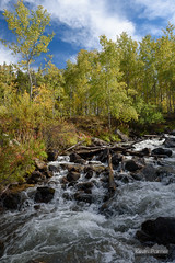 Rapid Creek (kevin-palmer) Tags: bighornmountains bighornnationalforest wyoming fall autumn september nikond750 tamron2470mmf28 rapidcreek stream flowing water redgraderoad circularpolarizer aspen trees