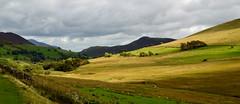 Lakeland Shadows (cassidymike21) Tags: landscape fields shadows trees fence moorside hills nikon sheep walls stream grass