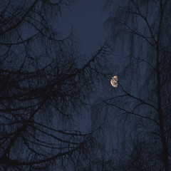 Veiled Moon (monkeyiron) Tags: trees winter moon snow tree silhouette square scotland branches perthshire dunkeld birnam