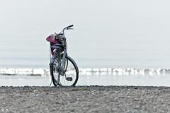 Loitering (Kenichi Ogu) Tags: beach bicycle japan nikon ripple sigma chiba tokyobay cpl 70200mm d40 makuharibeach