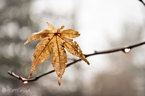 Leaf-Morning Dew-01