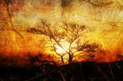 sunset tree (antman60) Tags: trees sunset awardtree trolledproud