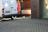 Geflügel in der Provinzstraße 13409 Berlin - Wedding (thmlamp) Tags: wedding berlin germany deutschland outdoor indoor huhn gwb geflügel inoutdoor 13409 guessedberlin берлин freilaufend bodenhaltung erikistderbeste gwbatineb provinzstrase 27122012 ratenmachtspass