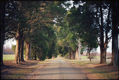 (Ansel Olson) Tags: road film canon virginia kodak ft 100 cedars ektar 55mmf12