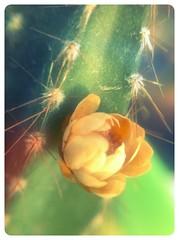 Em meio aos espinhos sempre brota uma flor.