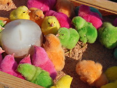 Pulcini a colori (italian in Q8) Tags: market chicks kuwait mercato kuwaitcity fridaymarket pulcini
