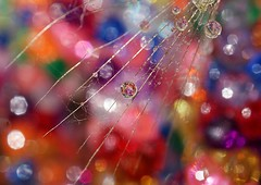 Be free of all limitations! (water.drop .....( on & off )) Tags: new friends macro water colors happy flickr all bokeh year free drop refraction be sparks limitations