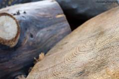ΚΟΡΜΟΙ ΕΘΝΙΚΟΣ ΔΡΥΜΟΣ ΠΑΡΝΗΘΑΣ (CHAIDOULIS) Tags: trees mountain nature athens attiki ξυλο εθνικοσ κορμοσ δρυμοσ παρνηθασ