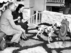 John Farrow and Maureen O'Sullivan (Amy Jeanne) Tags: dalmatian maureenosullivan