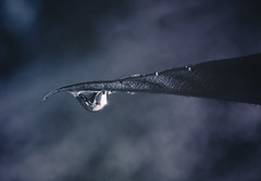 The last drop of water (Proleshi) Tags: macro water closeup leaf agua nikon bokeh drop h2o waterdrops d300s proleshi jamaljosephs