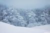 cold beauty (.:: Maya ::.) Tags: winter mountain snow tree nature woods bulgaria beech природа зима планина красота гора стара сняг мазалат буки mayaeye mayakarkalicheva маякъркаличева