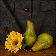 Favorite Things (njk1951) Tags: favorite pears squareformat sunflower comfort favoritethings tweedjacket