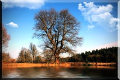 Winter tree at Clumber Lake (Bob__Gilmour) Tags: winter vacation sky lake holiday tree water clouds walking landscape scenery hiking vista naturalbeauty distance nationaltrust rambling waterscape clumber secne clumberpark placesofinterest nottinhamshire