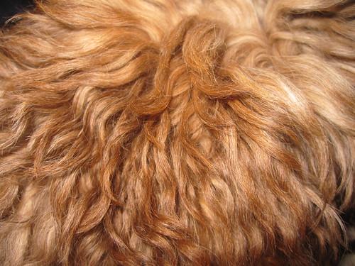 frank doghair