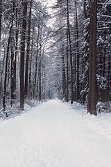 Snow in the forest (Belleisi) Tags: schnee trees white snow tree forest way wald bume baum weg schneefall schneewald