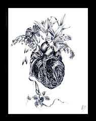 The Sacred Heart (Kelly Durette) Tags: flowers drawing anatomy stargazerlily sacredheart bleedinghearts originaldrawing kellydurette
