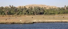 Egypt, January 2013 (Virginia McLeod) Tags: egypt nile aswan abu luxor kom ombo simbel edfu