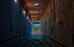 Urban Exploration (Jason _Ogden) Tags: flickrfriday trees blue abandoned oregon urbanexploration walls d90 graffiti mill nikon green sweethome urbex
