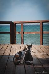 """81/365: mimos en el horizonte..."" (Josune Martin) Tags: gato gatos mimos caricias exterior horizonte mar costa playa muelle maana"
