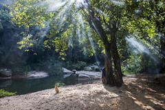Be with You (Dilanka Bandara) Tags: sri srilanka kohonnawala badulla madolsima dog sunrays morning asia river