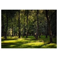 Magischer Moment (Nikonfotografie) Tags: landschaft landscape landschaftsfotografie naturfotographie abendstimmung nikond7100 nikon meinnorden lichtundschatten zauberwald niedersachsen heide lneburgerheide
