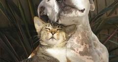 Kute Cat And Dog via http://ift.tt/29KELz0 (dozhub) Tags: cat kitty kitten cute funny aww adorable cats