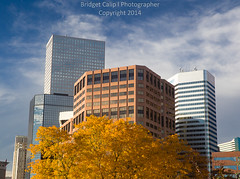 Downtown Denver Skyline With Golden Tree (Bridget Calip - Alluring Images) Tags: 2014 autumn bluesky bridgetcalip buildings capitalcities centennialstate civiccenterpark clouds colorado coloradocapitol decidioustrees denver fallcolor marble milehicity milehighcity queencityoftheplains skyscrapers trees windows allrightsreserved copyrighted downtowndistricts financialdistrict goldendome puffyclouds unitedstates us