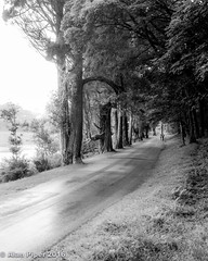 Walk with me (PapaPiper) Tags: avenue walk ireland trees kylemoreabbey blackwhite countygalway connemara connaught