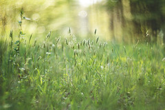 Let it grow (Tammy Schild) Tags: field grass green spring nature bokeh blur helios 402