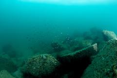 se3500_IMG_1060 (OKANO14) Tags: hong kong scuba diving