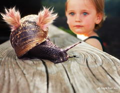 Nothing is too Wonderful to be True ... (rubyblossom.) Tags: photoshopcontestweek592 snail child wonderment fairytale sparkle wings rubyblossom rubystreasures 2016