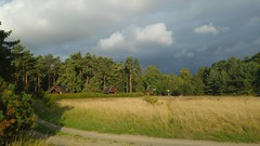 The Meadow (catha.li) Tags: lgg4 sweden indiansummer naturewatcher meadow nofilter soe