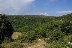 20140630 - Sannicandro Garganico - Pozzatina - 004 (orsoyoghurt) Tags: daunia gargano orsoyoghurt alberi sannicandrogarganico doline