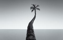 Indivisible (Loscar Numael) Tags: longexposure puertorico palm caribbean decor distagon2815 zeiss nikon singhray morslo isladelencanto borinquen