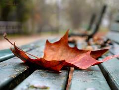 Autumn Inspiration ... (MargoLuc) Tags: autumn season bokeh bench leaves fall park walk trees inspiring morning