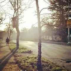Street (pixelpirog) Tags:       morning trees street city sunlight