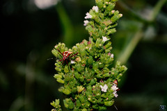 BioEsplendor (Lucian Crispim) Tags: inseto animal
