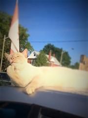 Godfather (Jewell Imaging) Tags: godfather makinganoffericantrefuse cat