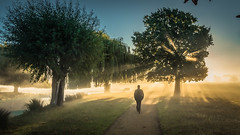 Into the light (stephen.darlington) Tags: bushypark london teddington hampton autumn misty fog foggy mist morning surreal art light nature sunbeams sun sunrays