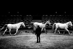 Artist Interview (Text in Description) (artnarratives) Tags: photography monochrome documentary circus
