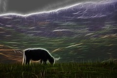 Grazing (D-W-J-S) Tags: abstract landscape cow lakedistrict highland highlandcattle grazing highlandcow fractalius