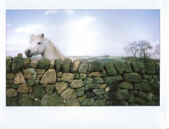 (teacup_dreams) Tags: horse film landscape polaroid fujifilm instax 210 filmfilmforever