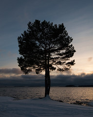 Early winter - Skutberget (- David Olsson -) Tags: winter sunset lake snow cold tree nature water clouds landscape nikon december sundown cloudy sweden freezing karlstad vnern lonelytree 2012 dx vrmland 1635 1635mm lakescape skutberget lonesometree d5000 davidolsson 1635vr