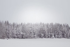 Winter trees (Sofia Ytell) Tags: trees winter snow sweden hlsingland