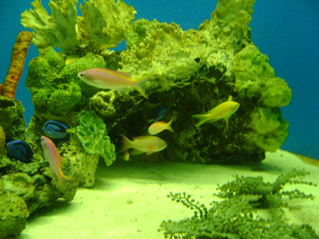 The world 39 s most recently posted photos of peceras for Peces de acuario