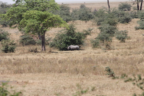 Rhino in Ngorongoro Crater (23)
