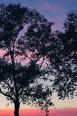 (B r i l l u) Tags: twilight tramonto albero